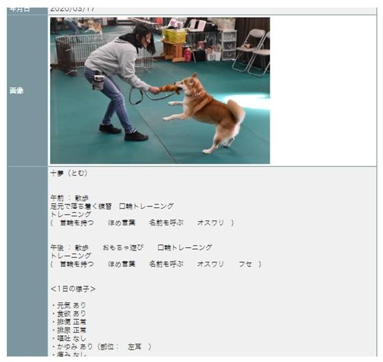 保護犬 預かり訓練