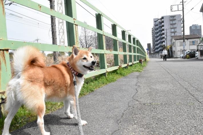 柴犬 愛護センター 訓練