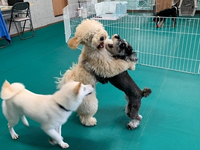犬の幼稚園 相模原