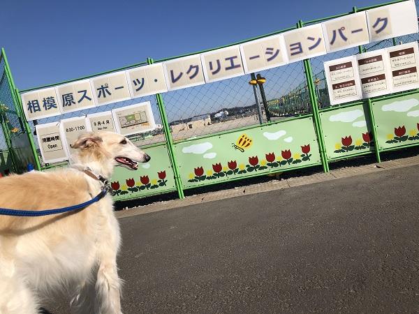 相模原スポーツレクリエーションパーク 犬.JPG