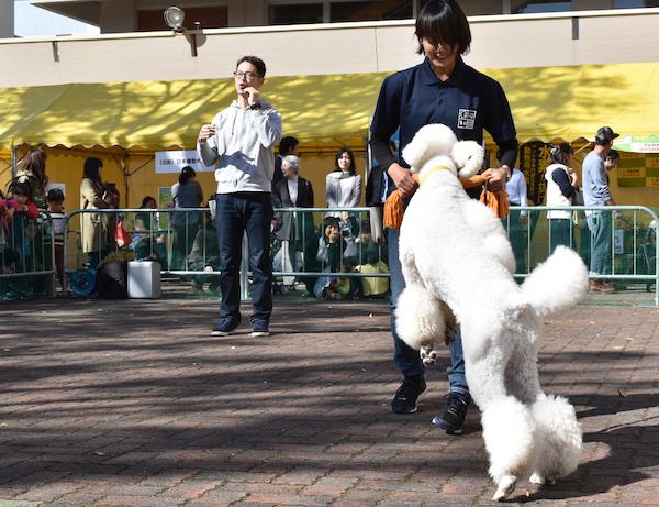 動物フェスティバル2.png