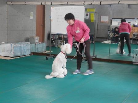 教育支援犬2.jpg