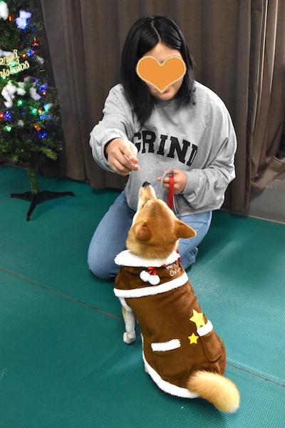 柴犬 杏ちゃん クリスマス会 2018