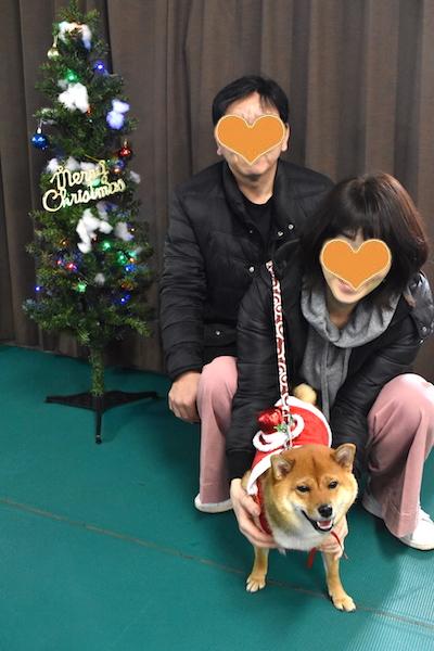 柴犬 乙ちゃん クリスマス会 2018