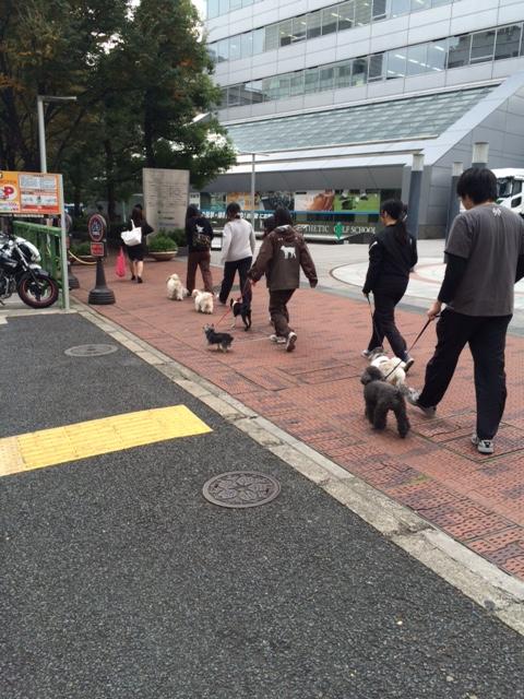 ビジョナリー 散歩練習.JPG