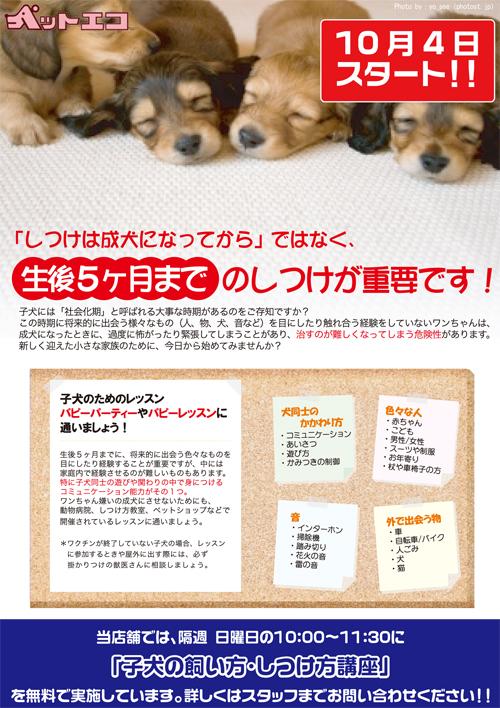 子犬しつけ相談事前チラシ.jpg