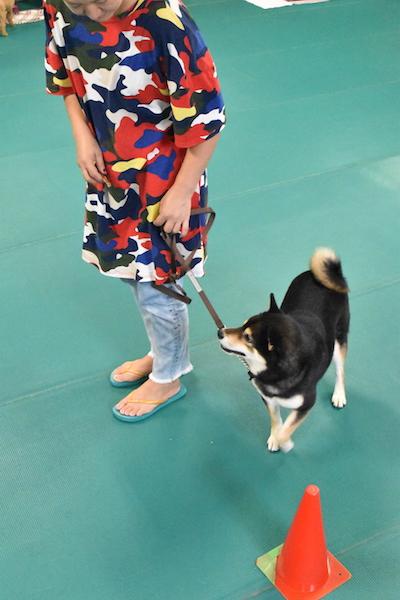 柴犬の大和くん.jpg