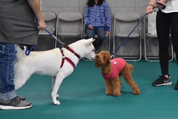 犬同士の挨拶.jpg