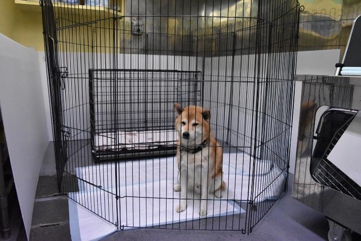 愛護センター 犬 しつけ