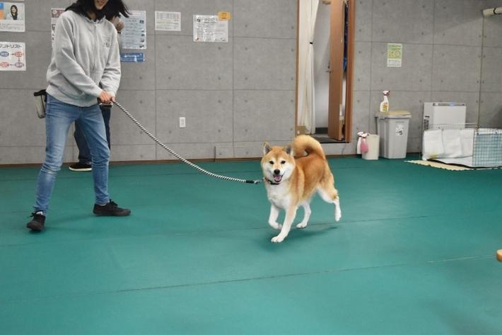 保護犬 トレーニング