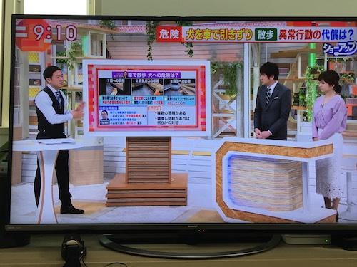 朝日テレビ モーニングショー 犬