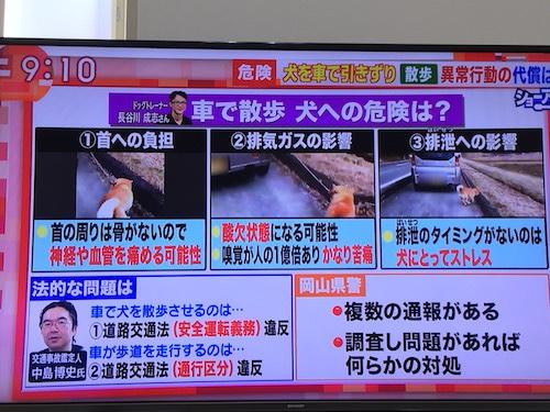 朝日テレビ 羽鳥慎一 モーニングショー 犬