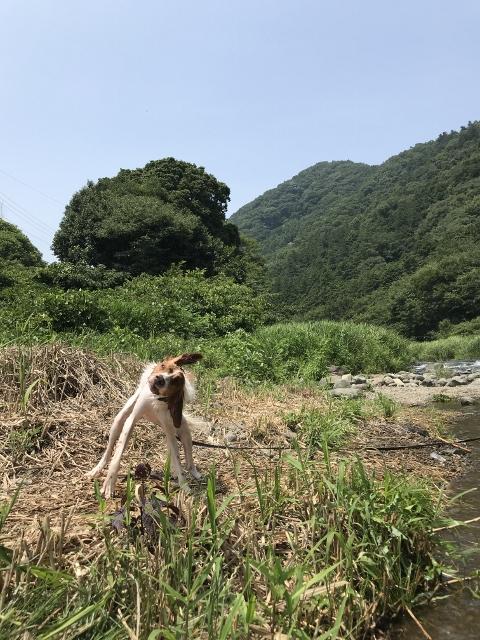 犬 中津川