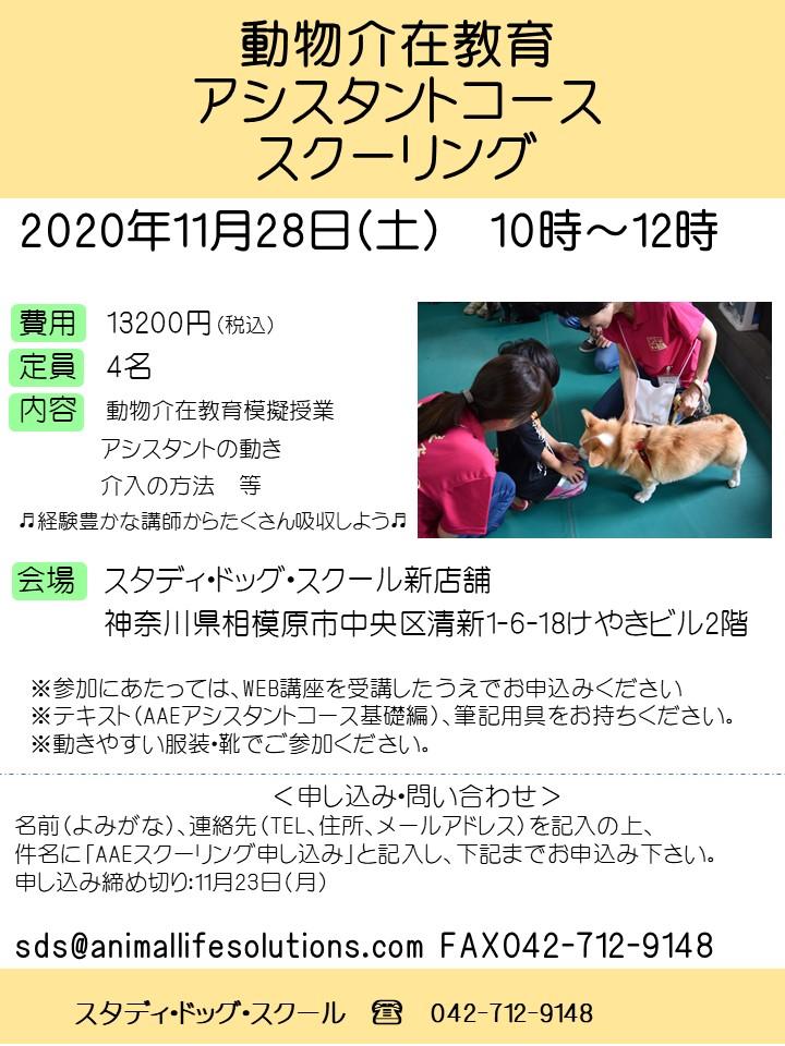 20201128AAEスクーリングSDS開催チラシ.jpg