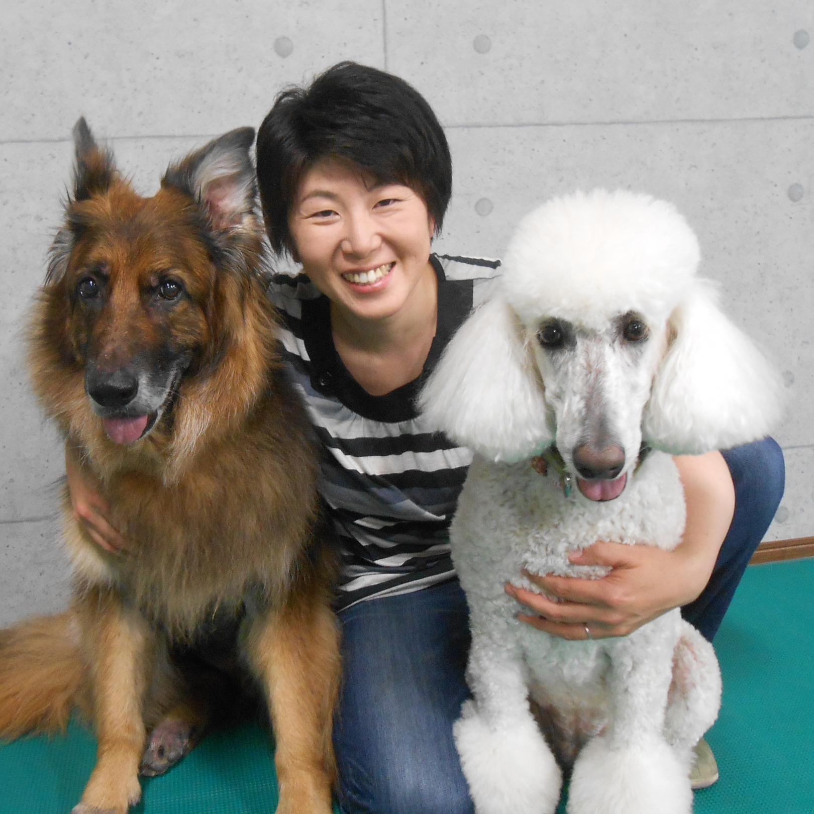 https://www.study-dog-school.com/member/upload_images/miyako.jpg