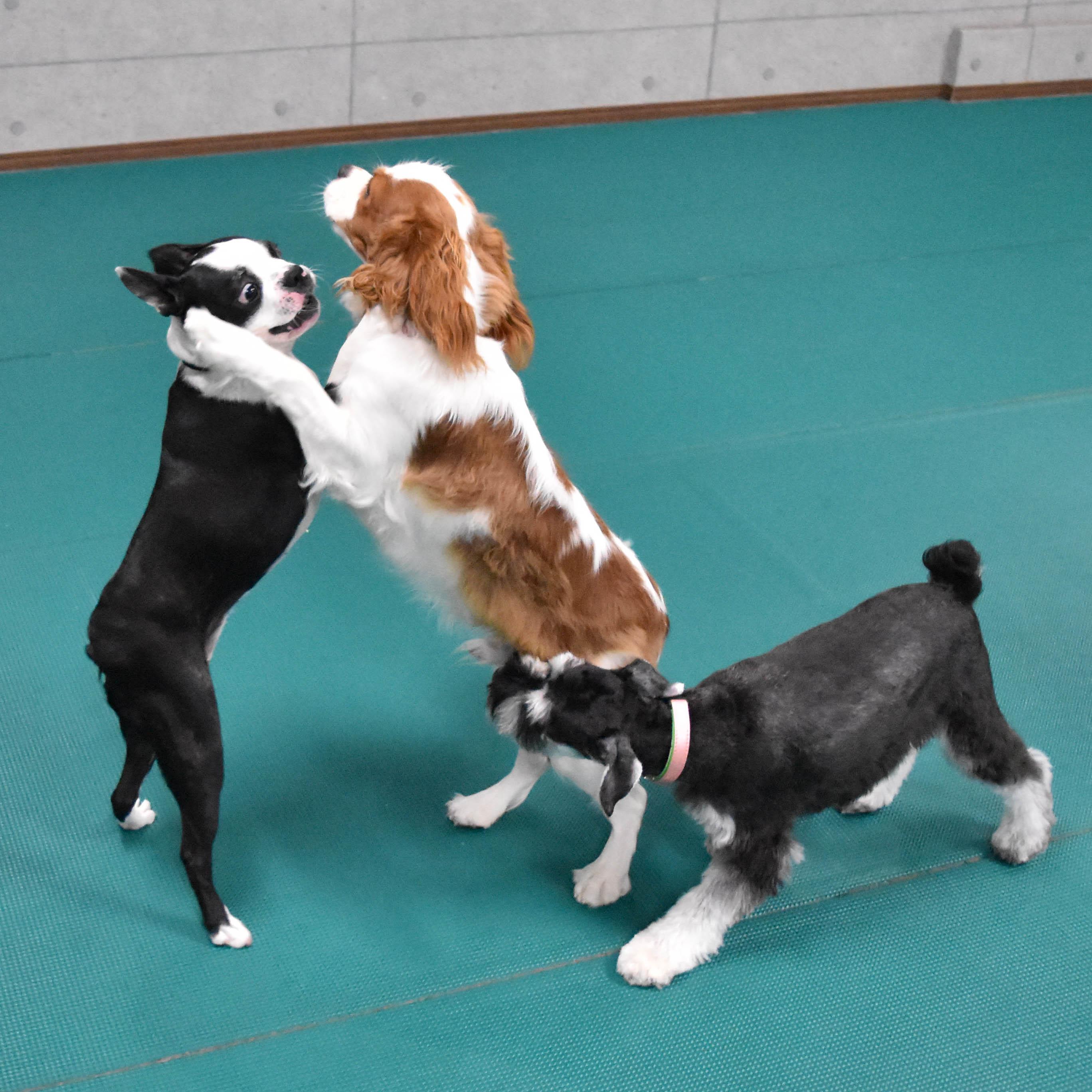 ウィルス 犬 コロナ